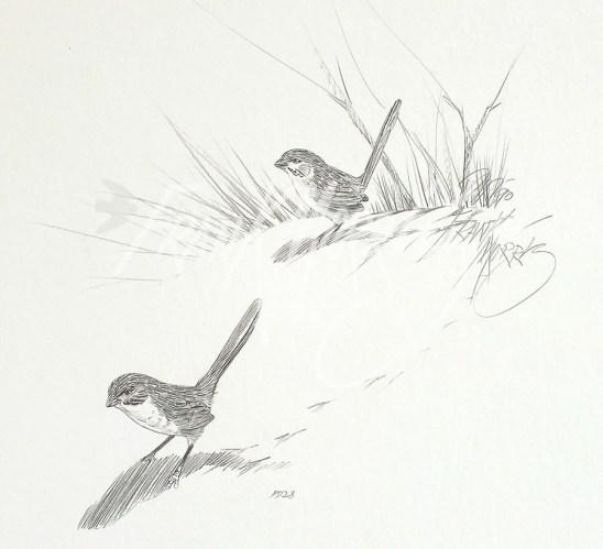 (PD28) Eyrean Grasswrens 76 x 51 cm $60