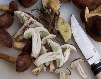Mushrooms_food_trends_2018