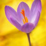 Flora otoñal