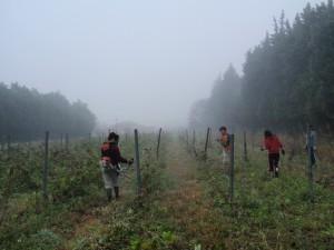 まだ靄のかかる朝早くから作業開始!