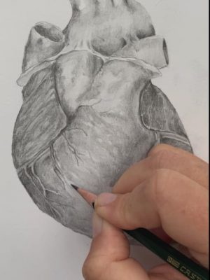 anterior heart