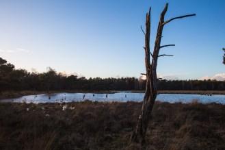 Imagemaker, location scout, Team_Mapito_Wetlands_MoodsNLD-101