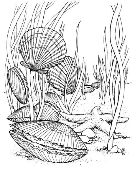 Sea Floor Drawing : floor, drawing, Frantic, Stamper, Cling-Mounted, Rubber, Stamp, Floor