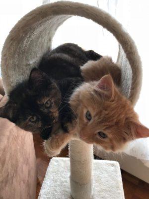 Unsere Mini-Katzen