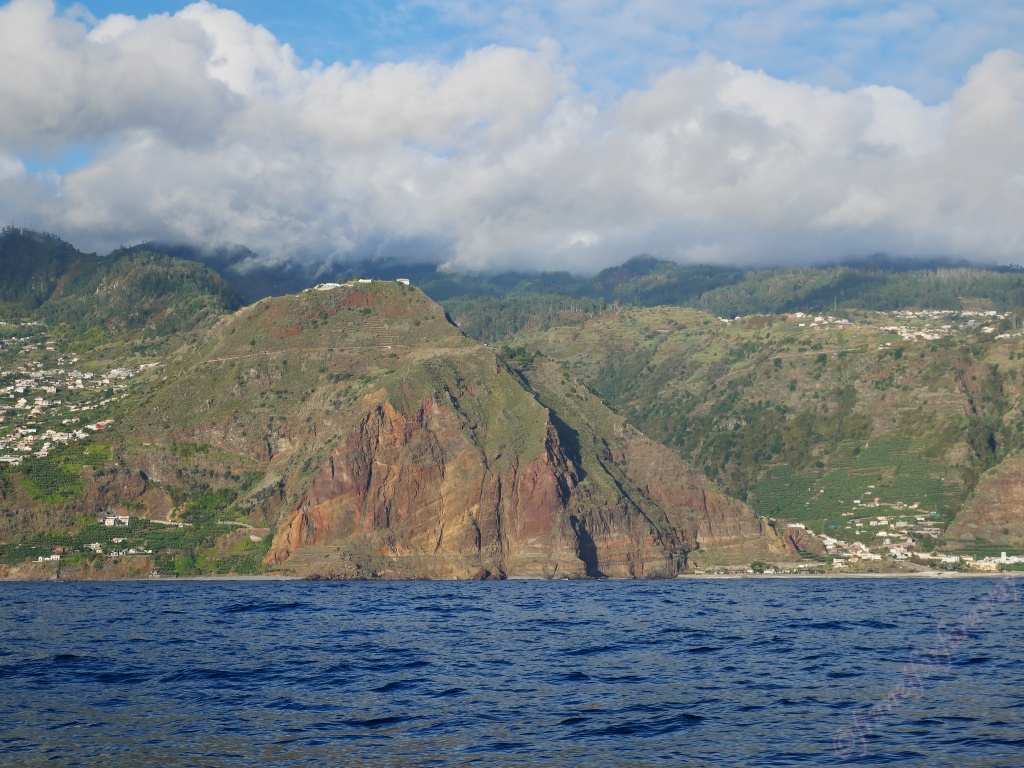 Whales in Madeira