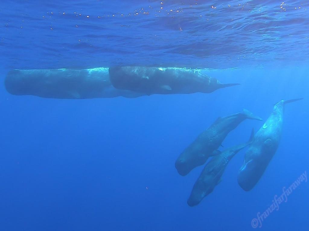 Whale Watching Tour in Calheta