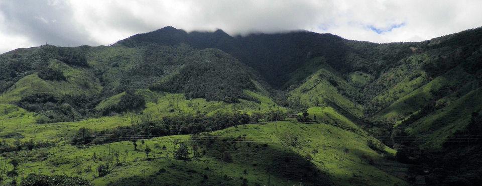 Deforestación y degradación de bosques