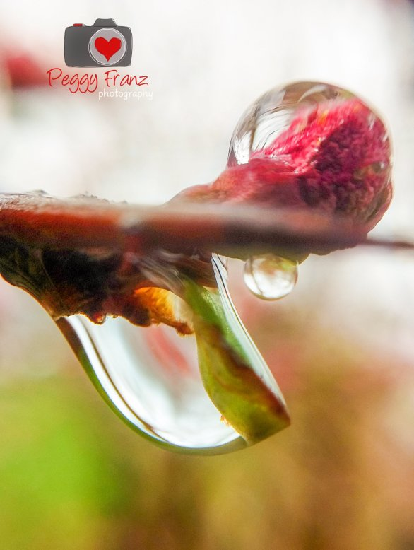 rain drop-Edit-1NAME RAIN DROP