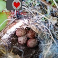 "Come check out ""Baby Birds"" Adventure from Hatching to Flying the Coup"