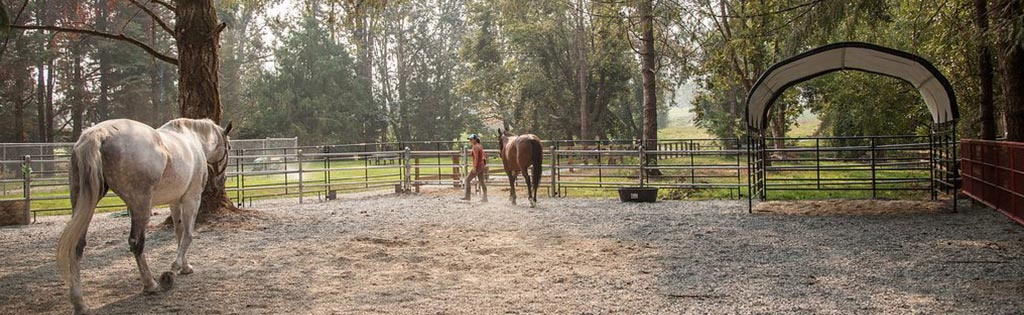 equine therapy treatment