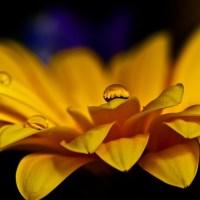 Haz flores del dolor