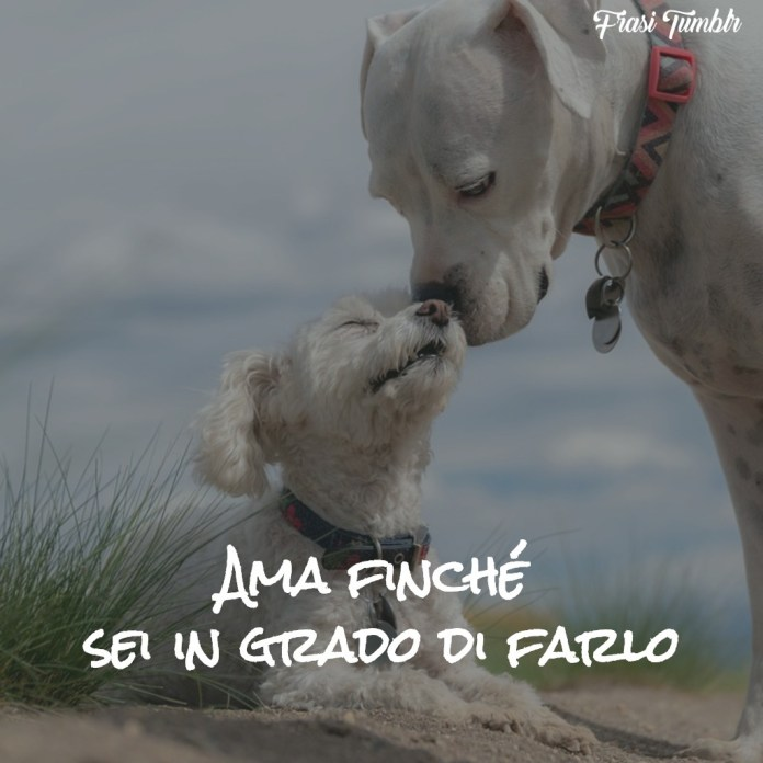 immagini-frasi-buongiorno-amicizia-amore-ama-1024x1024