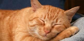 immagini frasi buongiorno sonno profondo definizione 1024x1024