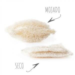 Estropajo biodegradable de luffa- vajilla y vitrocerámica