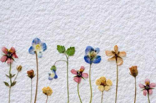 dried-flowers-on-white.jpg