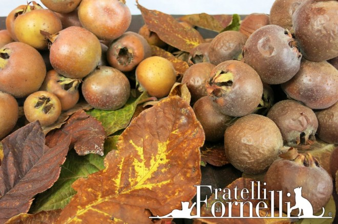 nespole germaniche mature medlar fruit