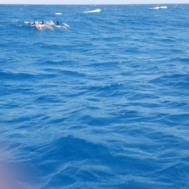 Frau Piepenkoetter I Delfine auf hoher See in Aegypten