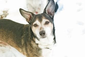 Schneehund Maxe