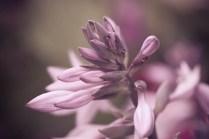Blütenmkaros