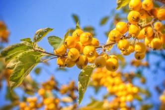 Herbstfrüchte nicht zum Essen