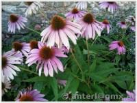 Frau Quak's Haus & Garten Blog |  der allerbeste Blog der ...