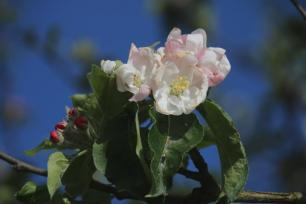 Frühlingsfarben (10)