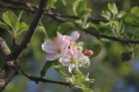 Frühlingsfarben (3)
