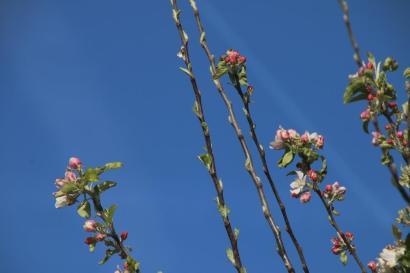 Frühlingsfarben (4)