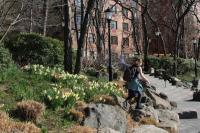 Frühlingsknospen (11)