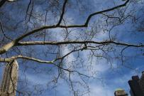 Frühlingsknospen (5)