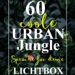 60 coole URBAN JUNGLE Sprüche für deine Lichtbox