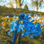 Etwas Alltag // Bei einem kleinen Spaziergang im Örtchen den Frühling entdeckt