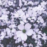 Mein Mai in Bildern