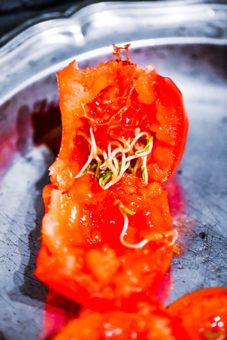 Kryptoviviparie bei Tomaten