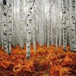 betulla: bagno di bosco di nuova luce