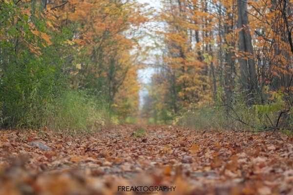 Fall Nature Photography 2019
