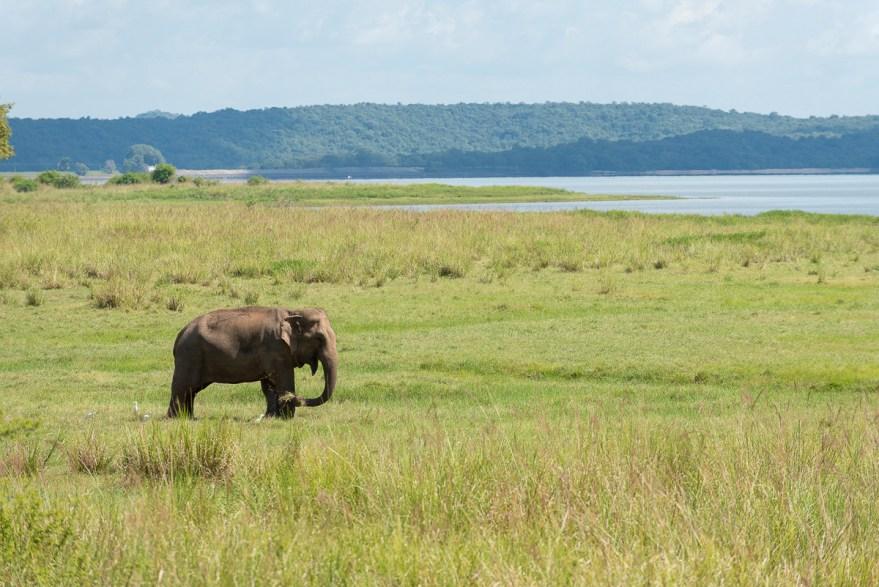 reporter photographe elephant sri lanka