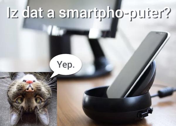 Cat-TA.jpg