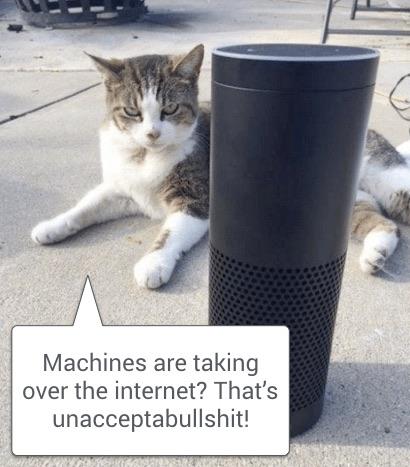Echo-cat.jpg