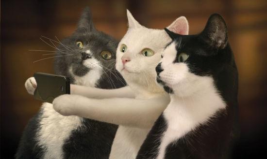 cats-selfie.jpg