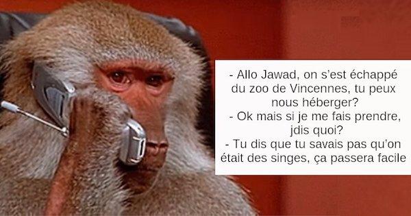 babouins.jpg