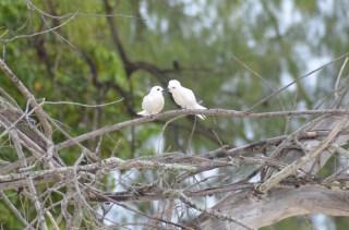Oiseaux - Ile Cousin