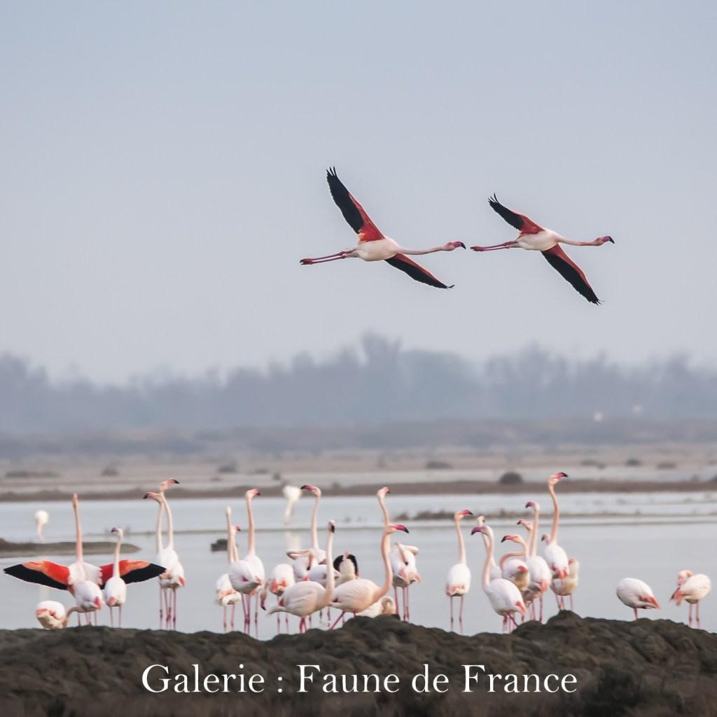 Cliquez ici pour accéder à la galerie : Faune de France