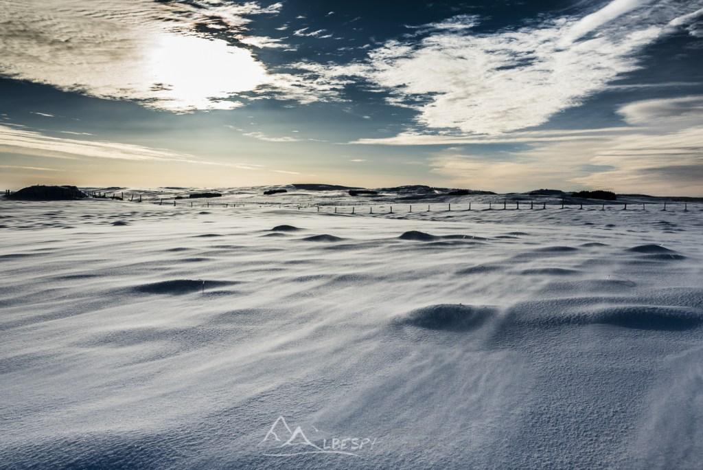Blizzard sur l'Aubrac (Plateau de l'Aubrac) n°0221