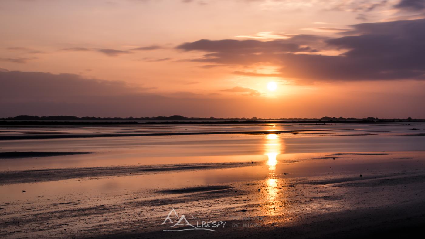 Coucher du soleil sur l'étang du Grand Rascaillan (Camargue) n°0421