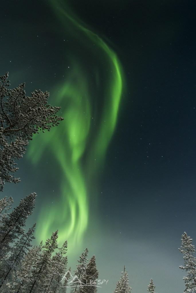 La danse des Elfes (Hetta - Finlande) n°0908