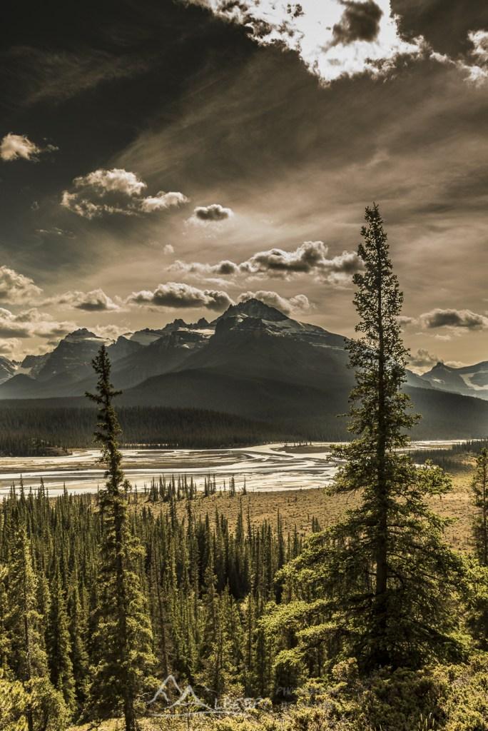 Promenade des Glaciers (route reliant les Parcs Nationaux de Banff et Jasper - Alberta) n°0608