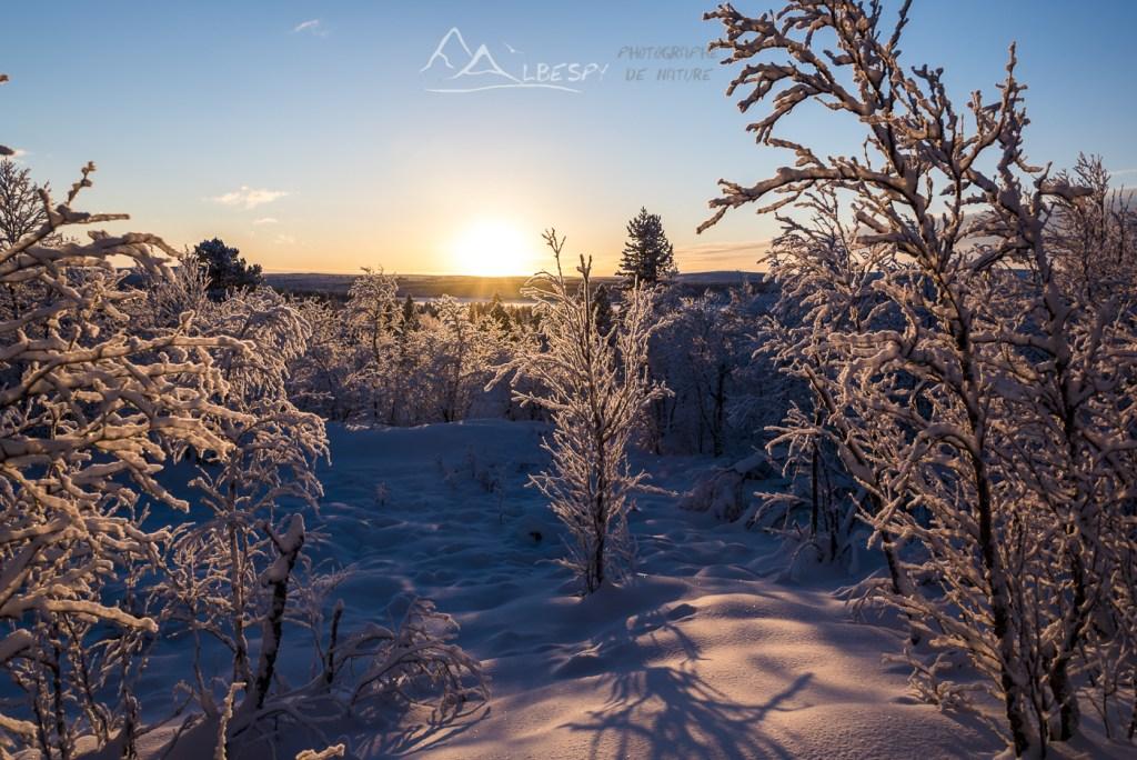Dans les bois Lapons (Suède) n°1006