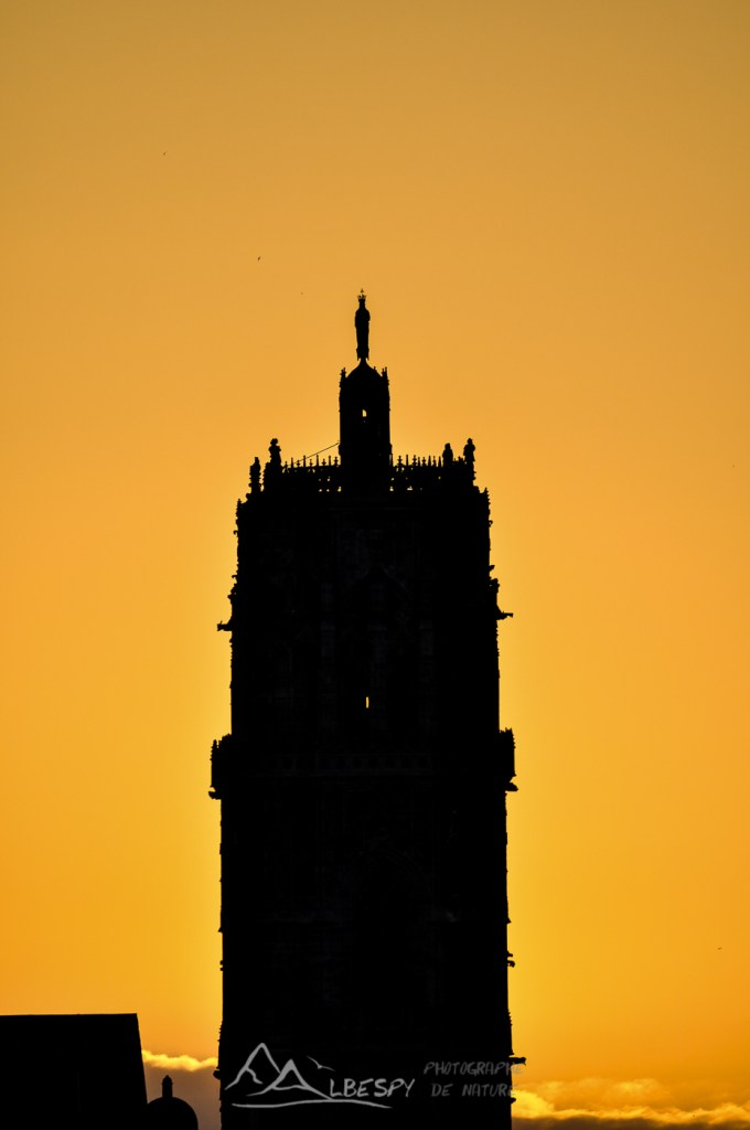 Cathédrale Notre Dame (Rodez) n°1118