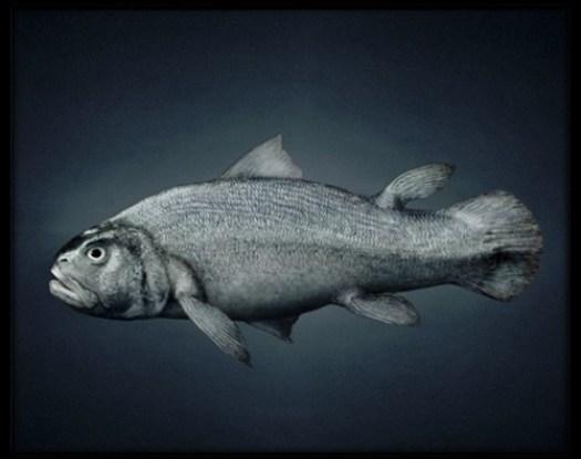 evolution-poisson.jpg